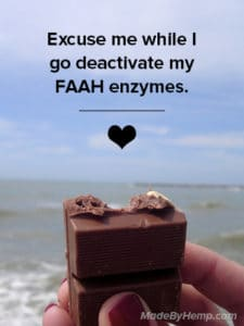 cacao deactivates faah enzymes and contains cannabinoids | Made By Hemp